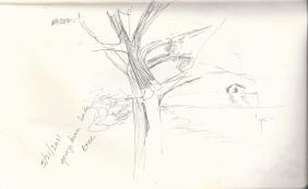 tree georgetown