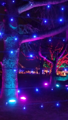 Day 21 from the Trail of Lights last year - views through the blue light grid